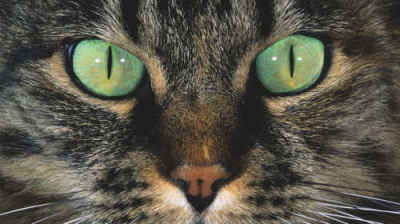 Sperimentazione animale, oltre i punti di vista